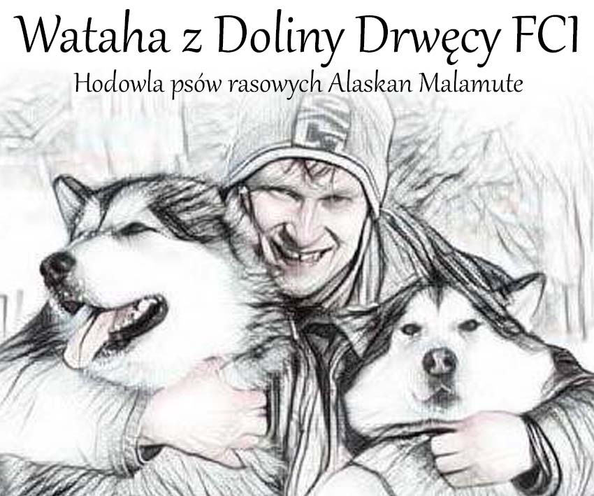 Wataha z Doliny Drwęcu FCI