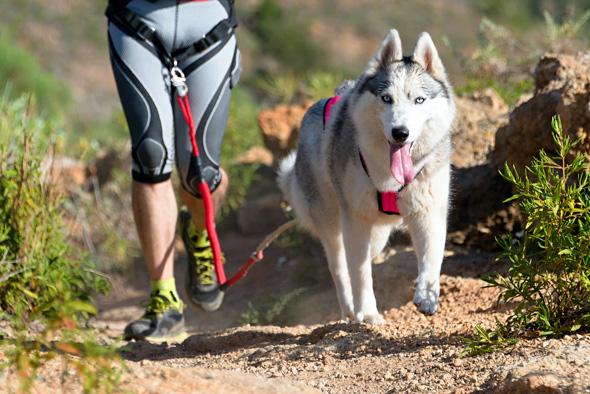 Jak zacząć uprawiać psie sporty